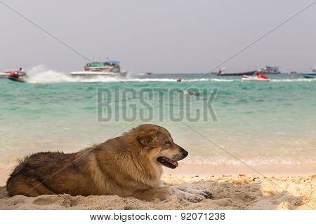 Dog Lies On Beach Sand
