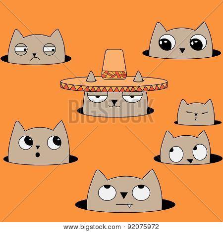 cat in Sobrero