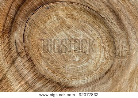 Wood Trunk Sawing Texture