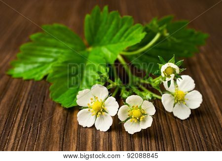 Strawberry Flowers With Green Leaves