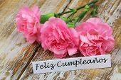 pic of carnation  - Feliz cumpleanos  - JPG