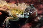 foto of amphibious  - The image of a lizard - JPG