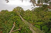 picture of canopy  - Rain Forest Canopy Suspension Trail in the Peruvian Amazon - JPG