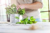 stock photo of basil leaves  - Man cutting basil leaves on a white wooden kitchen table - JPG