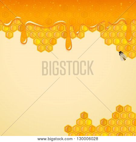 Background with honeycombs and the bee. Vector.