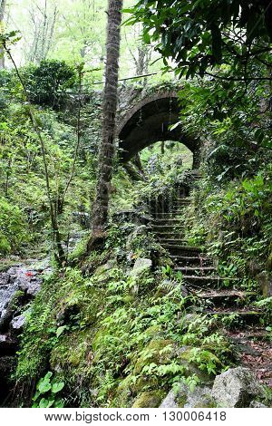Old abandoned staircase leading to a small tunnel in the subtropical rain forest.