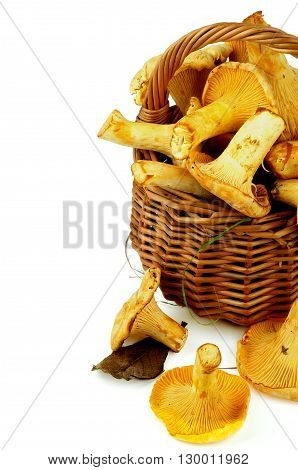 Perfect Raw Chanterelles with Dry Leafs and Green Grass in Wicker Basket Cross Section on White background