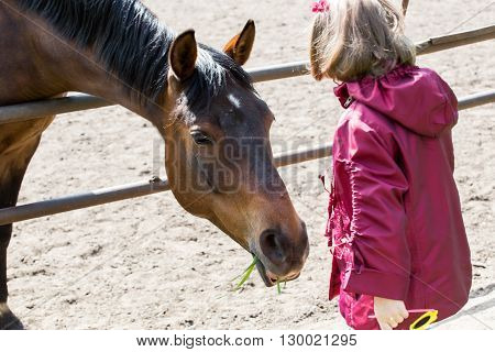 Girl feeds the horse out of the hands of green grass