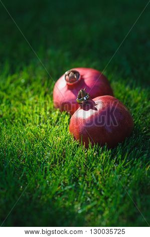 Two wedding rings on two Garnet. Two Fruit Garnet on the green grass