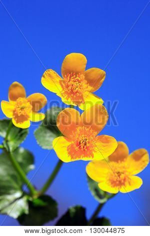 Closeup of nice yellow wildflower against blue sky