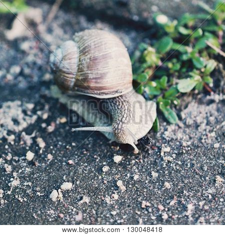 Snail on the road close up photo in retro style