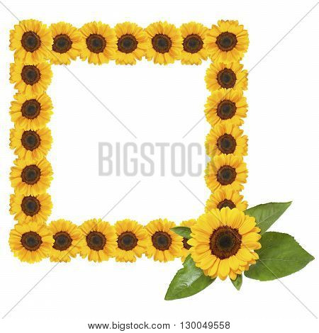 frame of yellow sunflowers on white background