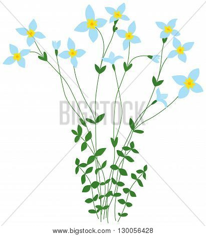 Illustration of delicate bluet wild flowers bunch