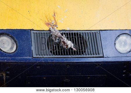 Pigeon stuck on grill of British train. Dead bird remains attached to front of high speed locomotive at the end of a journey