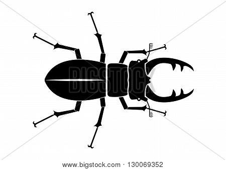 Beetle deer on a white background in vector graphics, stag beetles