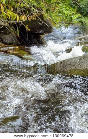 Streams in tropical forests water are flowing downwards