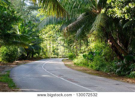 The asphalt road  through tropical  rain forest, Praslin Island; Seychelles