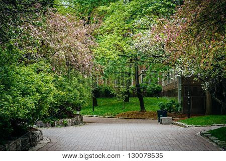 Spring Colors And A Walkway At Ryerson University, In Toronto, Ontario.