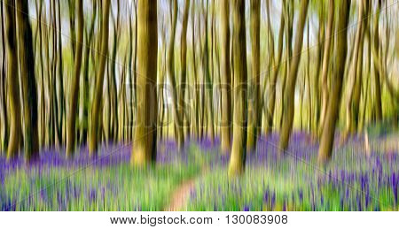 Motion blur of beautiful bluebell woods in Cornwall