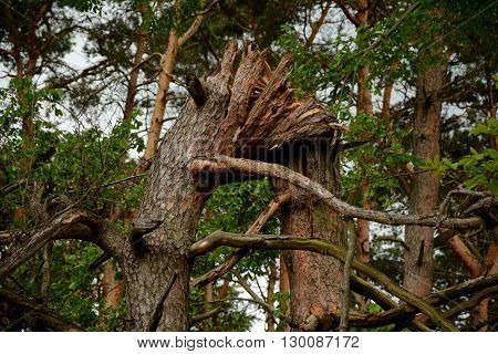 Photo of tree broken in half height in the forest