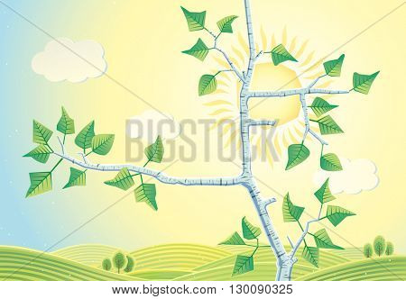 Sunny rural landscape with branches birch trees. Countryside sunrise landscape.
