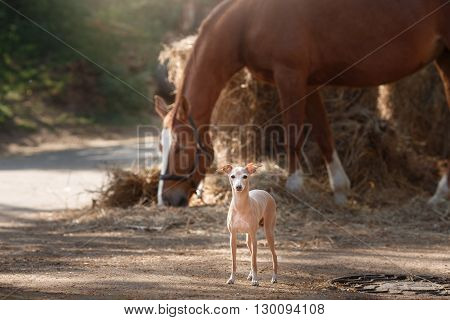 Horse On Nature. Portrait Of A Horse, Brown Horse, Horse Stands In The Paddock