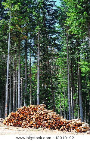 Sawed Firewood