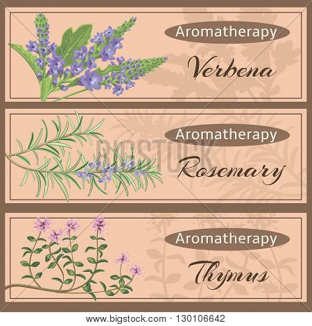Aromatherapy set collection. Verbena rosemary thymus banner set. Vector illustration EPS 10.
