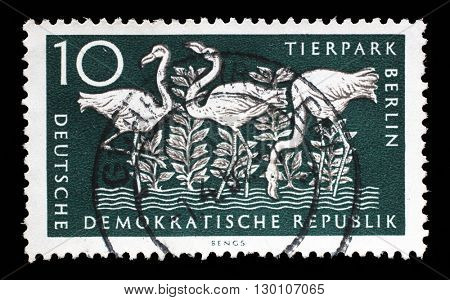 ZAGREB, CROATIA - JULY 02: a stamp printed in GDR shows Greater Flamingo, Berlin, German Zoological Garden, circa 1956, on July 02, 2014, Zagreb, Croatia