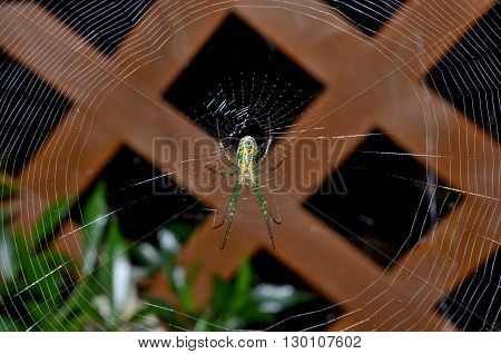 Colorful Garden spider in intricate perfectly patterned web.