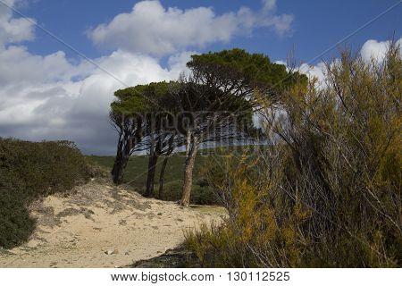 CAGLIARI: Beach south of Sardinia - Pineta adjacent to Ocean Beach pintau