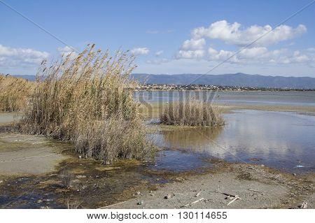 QUARTU S..E: Walk in the Park Molentargius - Sardinia - pond landscape with bushes