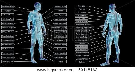 3D illustrationof a concept or conceptual human man anatomy and muscle text isolated on black background