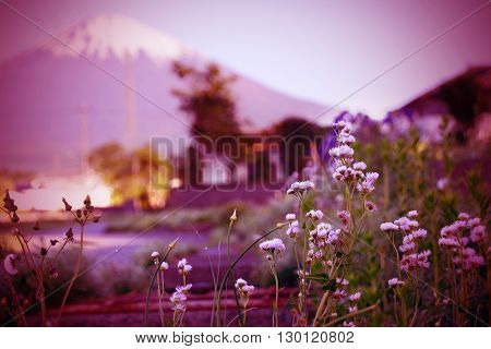 Little flower in local of Japan at end of Spring with Mount Fuji in background.