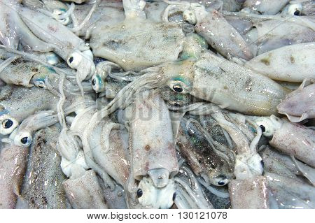 Squid for sale in the public market. Philippines. Palawan Island.