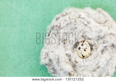 White fluffy nest with quail egg on closeup on green background, top view, copy space