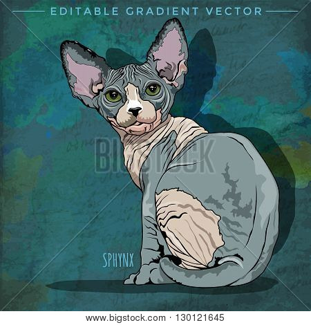 Sphynx Cat. Vector illustration of a cat at home.