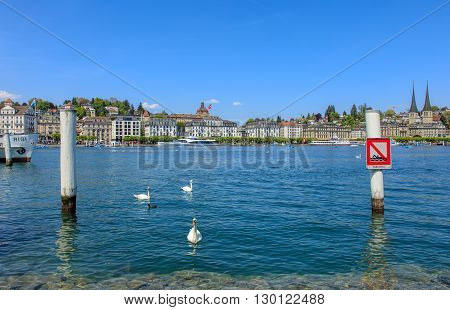 Lucerne, Switzerland - 7 May, 2016: swans on Lake Lucerne with buildings on the Schweizerhofquai quay in the background. Lake Lucerne (German: Vierwaldstattersee) is a lake in central Switzerland, the fourth largest in the country.