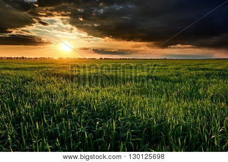 sunset, summer landscape, bright colorful sky and clouds as background, green field and trees