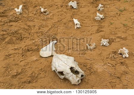 Dinosaur Bones in a makeshift bone sandpit for children at Cape Otway National Park in Australia