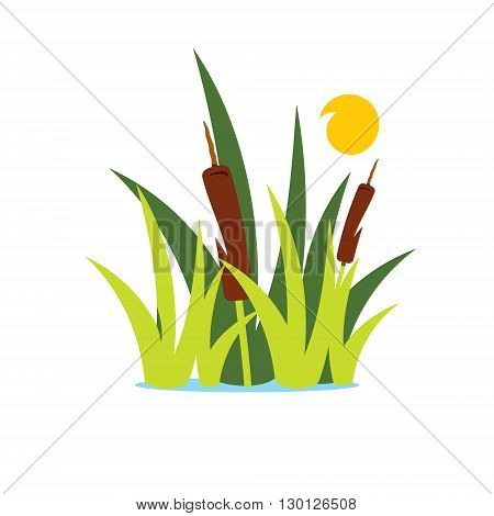 Aquatic vegetation and sun isolated on a white background