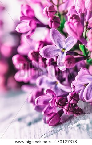 backdrop, background, beauty, blossom, border, botany, bouquet, branch, bush, decorative, detail, floral, flower, foliage, frame, fresh, garden, leaf, lilac, nature, outdoor, petal, pink, plant, purple, romantic, rough, scissors, season, secateurs, spring