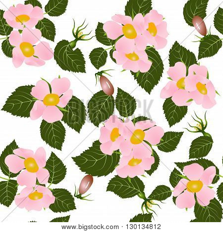 Seamless pattern, blooming wild rose with leaves isolated on white background, vector illustration