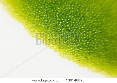 Abstract bright green spring background with blur and sparkles. Copy space. Spring background. Summer background. Texture.