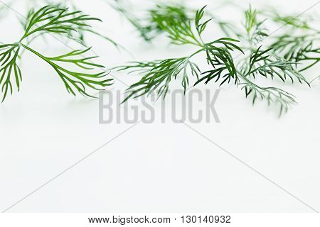 Sprigs of green dill on a white background. Frame with copy space for text.