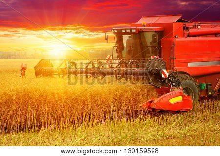 Combine working in field. Harvester harvests