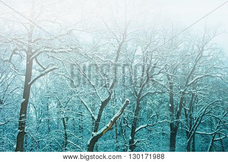 Blue vintage faded foggy snowy winter forest background