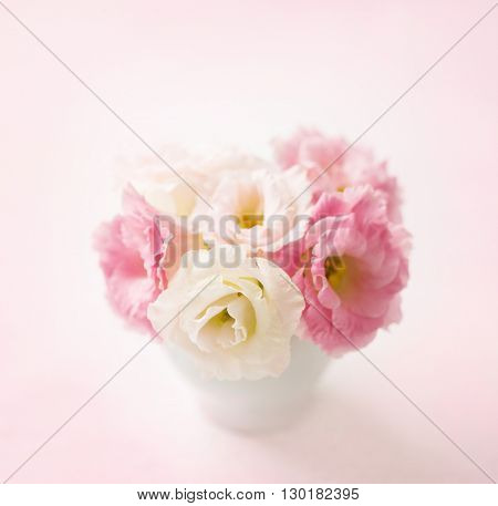 Pink flowers (eustoma) on pale  pink background. Shallow depth of field. Selective focus