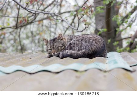 old cat sleeps on the roof of an old house