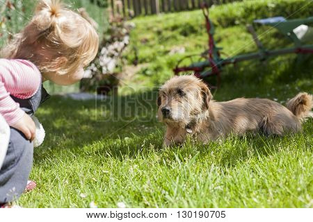 brown terrier breed dog lying on green grass lawn and looking blonde baby two years old